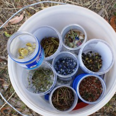 Small amounts of seed need to be collected every day in summer