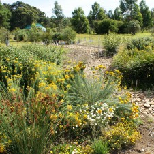 How native plants can transform your property